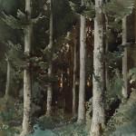 Sous-bois dans les Vosges