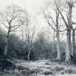h1029-la-foret-en-hiver