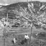 floraison_avril