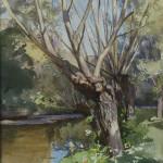 Saules en bord de rivière