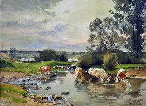 vaches s'abreuvant